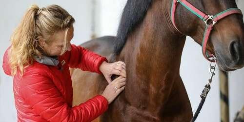Pferdephysio- und Rehatherapeut (bmg) biometrisch geschult